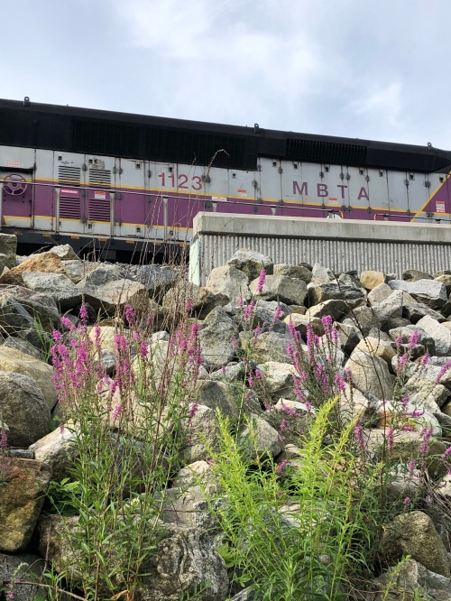 072420-purple-weeds-and-MBTA