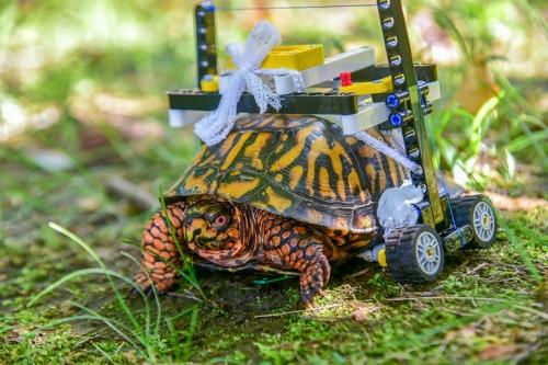turtle-168c15ec-c158-11ea-9fdd-b7ac6b051dc8-768x513-1