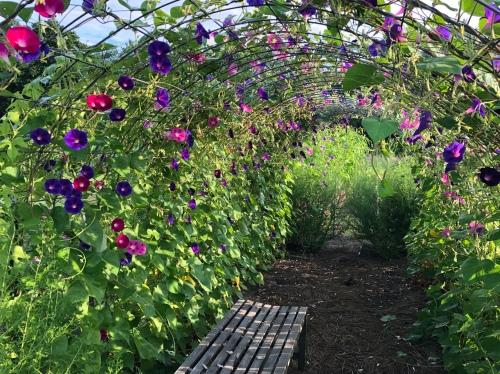 080620-arbor-in-community-garden
